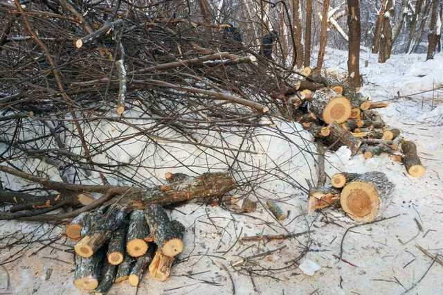 Жители Московской области просят Путина защитить реликтовый Липкинский лес от застройки