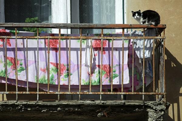 Москвича отправили в колонию за выброшенных с балкона кошек