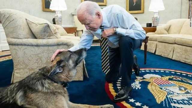 У Байдена умерла одна из его любимых собак по кличке Чемп