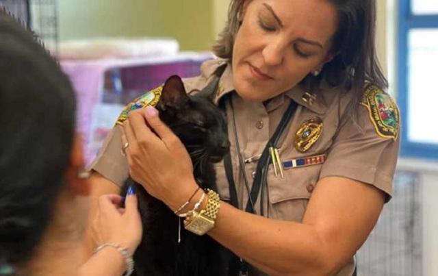 Под завалами дома в Майами нашли живого кота