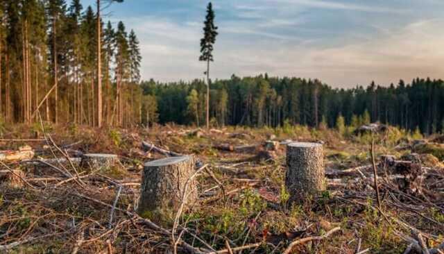 Руководитель холдинга Абрамовича призвал разрешить приватизировать российский лес