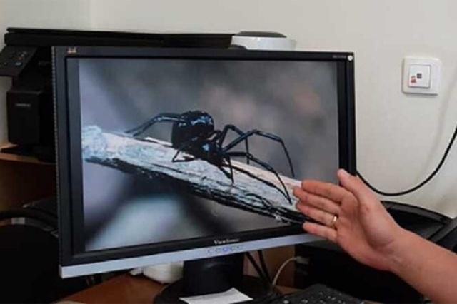 Жители российского региона пострадали от укусов смертельно опасных пауков