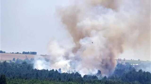 """Директор заповедника """"Хортица"""" заявил об умышленном поджоге соснового леса"""