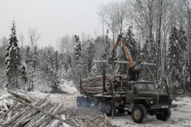 В Ярково будут судить директора фирмы, которая незаконно вырубила лес на 56 млн рублей