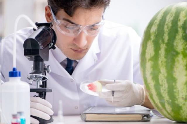 Следы вещества для уничтожения насекомых нашли в арбузах из «Магнита»