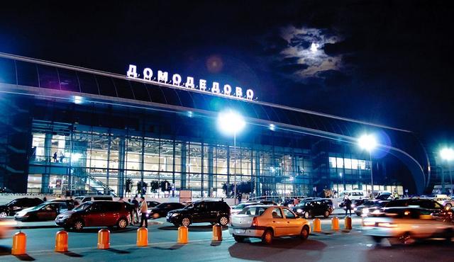 В аэропорту Домодедово третьи сутки идут поиски сбежавшей из багажа собаки