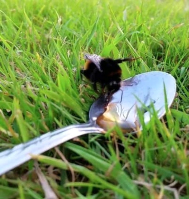 Чому гинуть бджоли